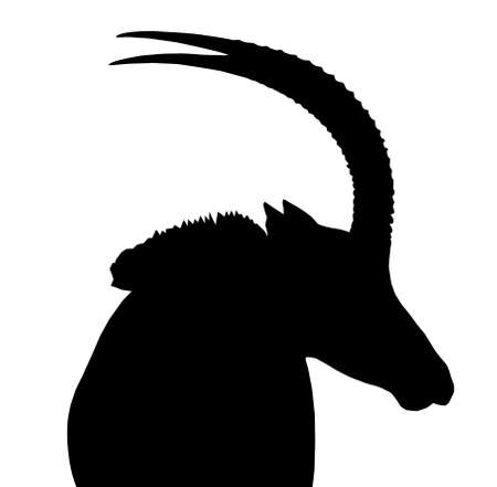 Large Sable Bull Portrait Picture Looking Sideways Isolated Silhouette Illustration