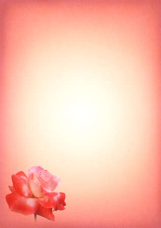 Pink Rose Print Writing Paper with Gradient and Text Area Stock Photo - 15663873