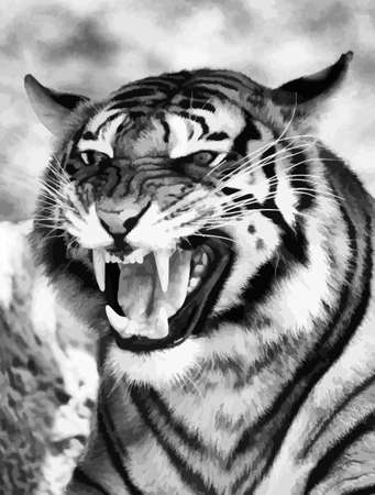 fearsome: Vector of a Very Angry Growling Tiger  Black and White  Illustration