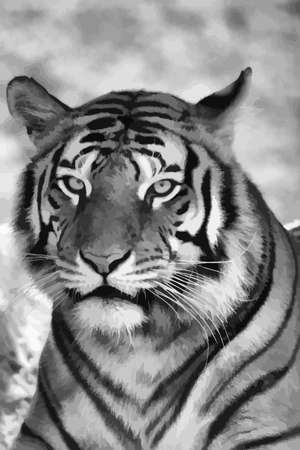 Vector Portrait of Tigers Face in Black and White Vector