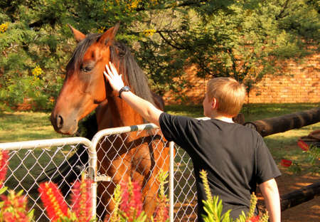 Boy at Gate Stroking Head of Large Pony