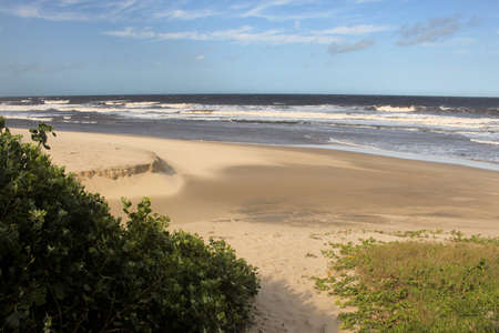 kwazulu natal: Picture of Coastal Succulents Beach and Sunny Weather