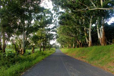 Picture of Green Tree Canopy Over Tarred Road photo