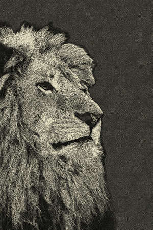3D Sepia Toned Isolated Lion Face Drawn Card Stock Photo