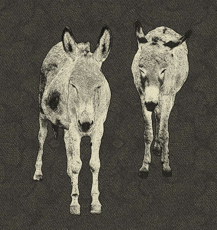 Black and White Drawing of Two Donkeys photo
