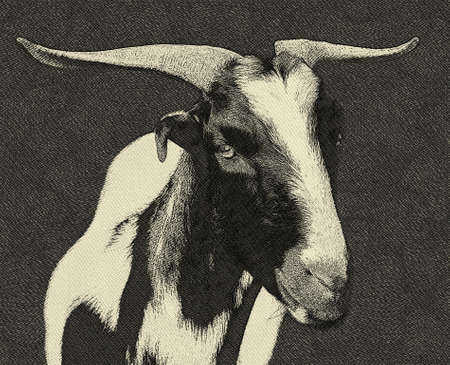 veld: Black and White South Africa Veld Goat Drawing Stock Photo