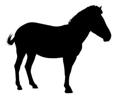 Side Profile Image of Zebra Standing Silhouette Vector