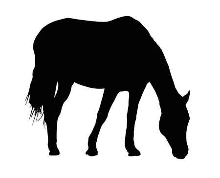 Detailed Portrait Silhouette of Large Horse Grazing Illustration