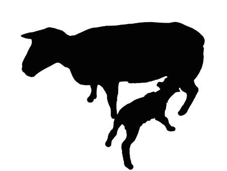 suckling: Detailed Silhouette of Sheep with Nursing Lamb    Illustration