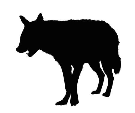 nocturnal animal: Detailed Portrait Silhouette of Spotted Hyena with Open Mouth