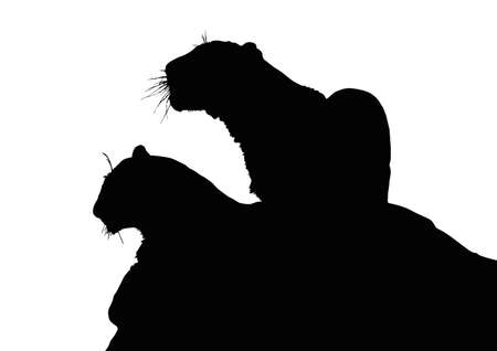 siblings: Detailed Portrait Silhouette of Young Leopard Siblings