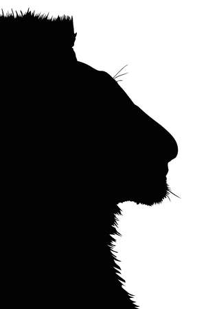 Detailed Portrait Silhouette of Large Lion Head  Vector