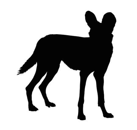 dog ear: Detailed Silhouette of Alert Wild Dog