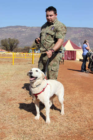 sniffer: THABAZIMBI, SOUTH AFRICA - August 1:  Special Trained Dog show at Thabazimbi Agricultural Show, on August 1, 2014 at Thabazimbi, South Africa. Trained sniffer Labrador dog, drug, narcotics and explosives, with handler.