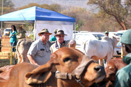 milton: THABAZIMBI, SOUTH AFRICA - August 1:  Cattle Breeders Championship at Thabazimbi Show, on August 1, 2014 at Thabazimbi, South Africa. Dr. Peter Milton on right, judging cattle at championship.