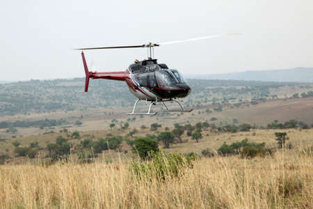 defaced: MAGALIESBERG, SOUTH AFRICA - October 14: Dehorning of rhinos in Askari Game Lodge, to protect them against poachers on October 14, 2015 at Magaliesberg, South Africa.  Helicopter used to dart animals from air.