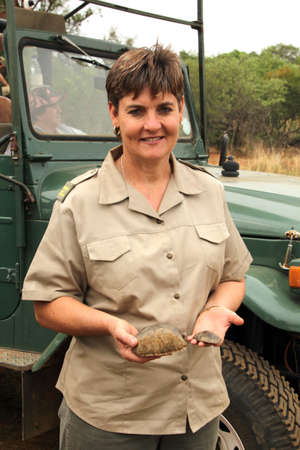 defaced: MAGALIESBERG, SOUTH AFRICA - October 14: Dehorning of rhinos in Askari Game Lodge, to protect them against poachers on October 14, 2015 at Magaliesberg, South Africa.  Gauteng Department of Nature Conservation representative showing pieces of trimmed horn