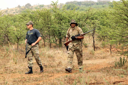 poach: MAGALIESBERG, SOUTH AFRICA - October 14: Dehorning of rhinos in Askari Game Lodge, to protect them against poachers on October 14, 2015 at Magaliesberg, South Africa.  Dehorning process under close armed protection of Anti Poaching Unit for protection aga Editorial