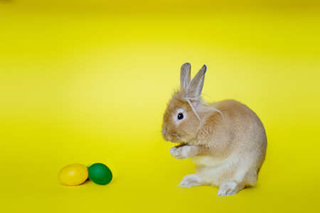 Cute rabbit seen from the side on a yellow background near Easter eggs V4