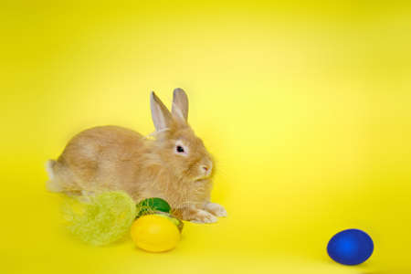 Cute rabbit seen from the side on a yellow background near Easter eggs V3