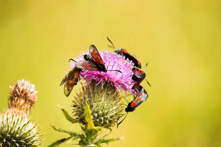 thistle plant: Insects on a thistle plant in a field in summer.