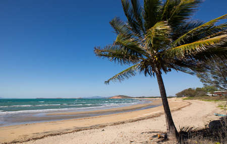 whitsundays: A palm tree on an empty beach in North Queensland, Australia Stock Photo