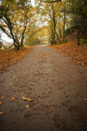 hojas de arbol: Un camino alineado con los �rboles en oto�o, hay hojas muertas una carretera y los lados.