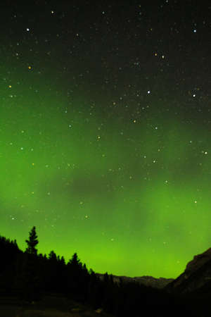 treeline: A green display of northern lights displaying above a silhouetted treeline. Stock Photo