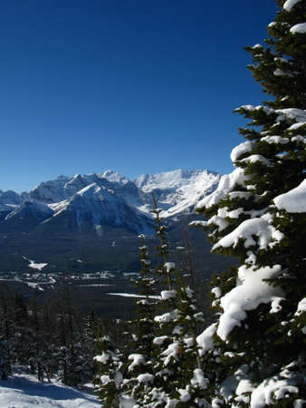 louise: A view of Lake Louise seen from behind snow covered trees on the ski area Stock Photo