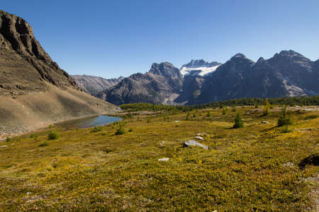 rockies: Looking across an alpine meadow in the Canadian rockies at a glacier-capped mountain.