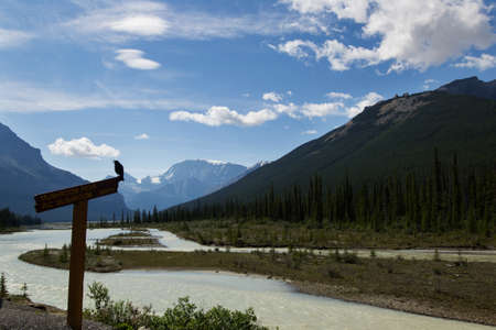 rockies: A raven perched on a sign beside a glacier-fed river in the Canadian rockies