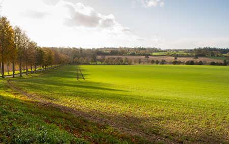 dorset: Fields around Moor Crichel in Dorset in bright winter sunlight. Stock Photo