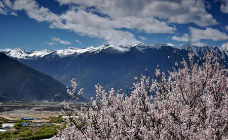 cloud capped: Where the peach blossoms are in full bloom