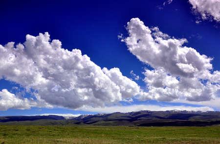 lofty: grassland scene Stock Photo