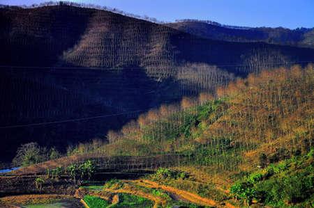 rubber: Rubber plantation Stock Photo