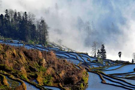 Terraced field scenery Imagens