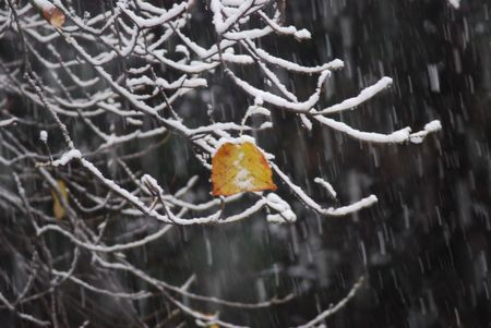 Seasons Collide Stock Photo - 760102