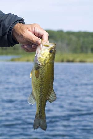 largemouth bass: la pesca de largemouth bass  Foto de archivo