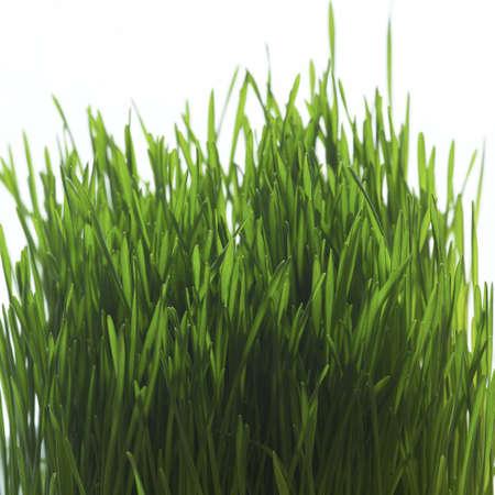 studio close up of grass blades