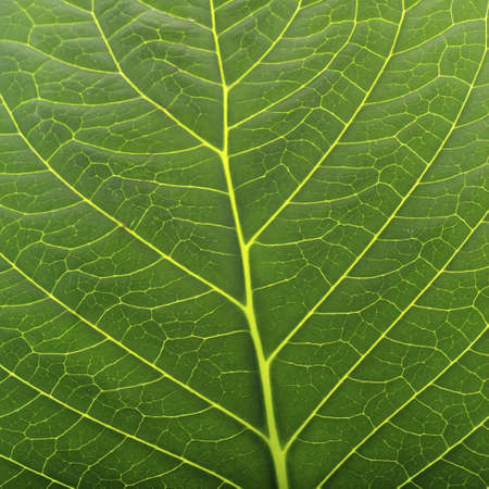 studio close up leaf from plant