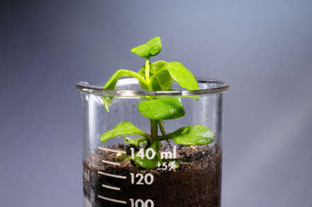 genomic: Small plant coming out from a laboratory glass