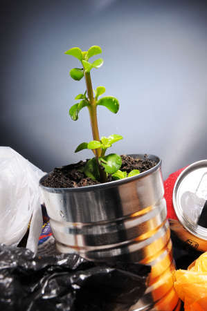 raising cans: Birth of a plant from a can in the garbage