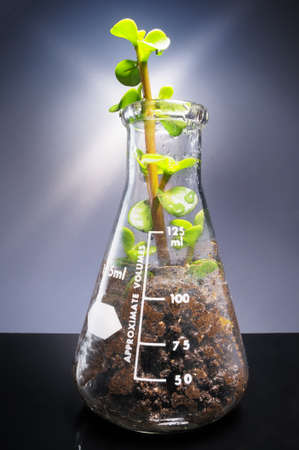 genomic: Small plant coming out from a laboratory glass decanter