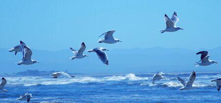 Several Seagulls Fly Over the Choppy Ocean