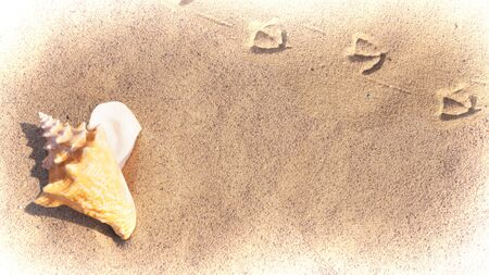 Large Conch Shell on the Beach 1