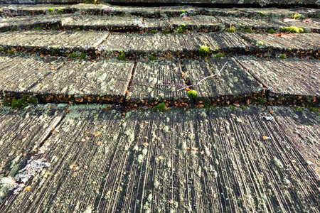 Old Wooden Shingled Roof with Moss and Fungus photo