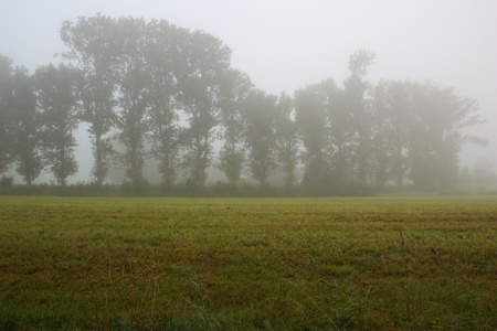 foggy grassland next to the Steinberger See in Bavaria photo