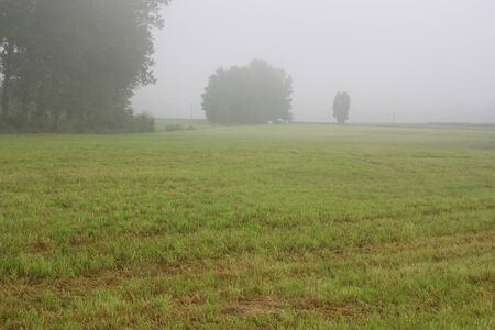 foggy grassland next to the Steinberger See in Bavaria Stock Photo - 10261938