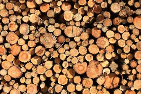 woodpile: a pile of wood near to the forest