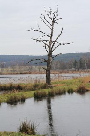 a little pond near schwandorf in winter photo